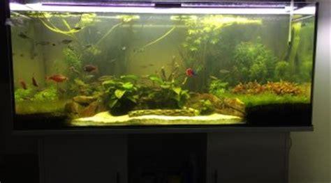 projet aquarium 300l afrique de l ouest avec apteronotus albifrons