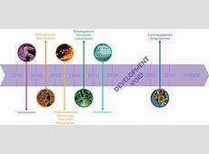 timeline showing discovery of new antibiotics Antibiotic