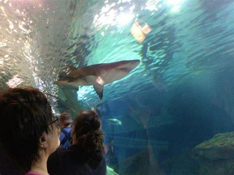 shark tank picture of sea minnesota aquarium bloomington tripadvisor