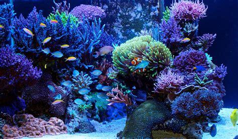 saltwater algae the ultimate guide home aquaria