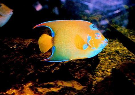 15 poissons color 233 s