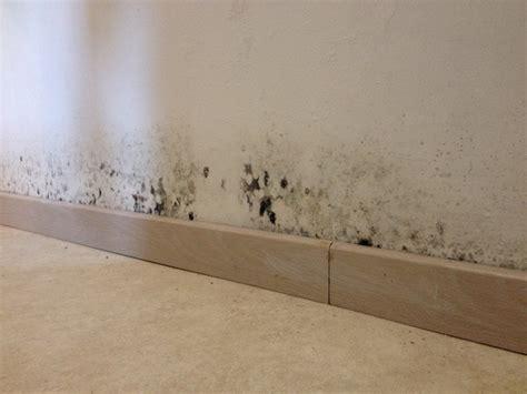 traiter un mur ou un plafond contre le salp 234 tre moisissure bricolerenove fr