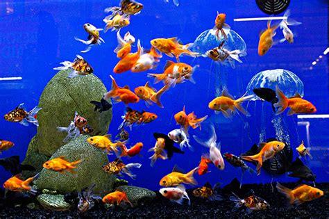 animaux vivants poissons silolux c3f proagri wolkrange messancy