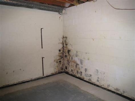 Mold removal services for residential and commercial