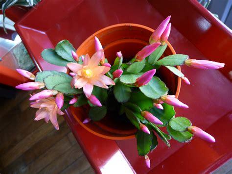 cactus de p 226 ques mohawk spirit c 244 t 233 jardin