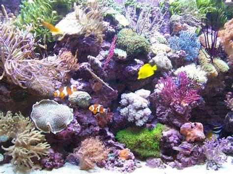 aquarium r 233 cifal chez poisson d or photo de voyage en belgique 15 16 novembre 2008 s b a o