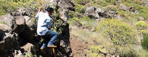 le saut du berger les jeux traditionnels tenerife