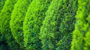 Immergrüne Winterharte Kübelpflanzen : gartengestaltung beispiele und ideen f r ihre gartengestaltung ~ Markanthonyermac.com Haus und Dekorationen