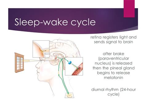 Sleep Wake Cycle by Ginger Nash Nd Oand November Ppt Video Online Download