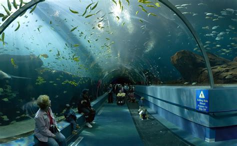 world news forum www keralites net world s largest aquarium aquarium awesome
