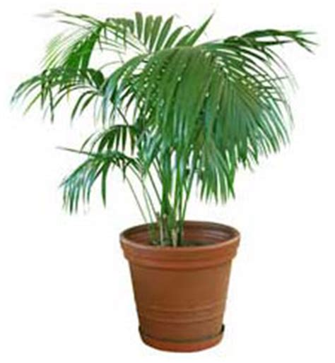 Tropical House Plants  Your Easy Growing Friends
