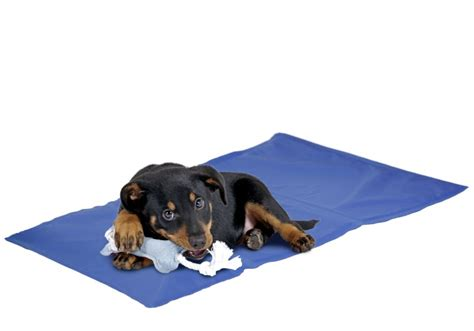 tapis rafra 238 chissant pm pour chiens et chats coussins pour chien sur animalerie boutique