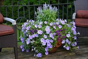 Die Schönsten Balkonpflanzen : balkonpflanzen ~ Markanthonyermac.com Haus und Dekorationen