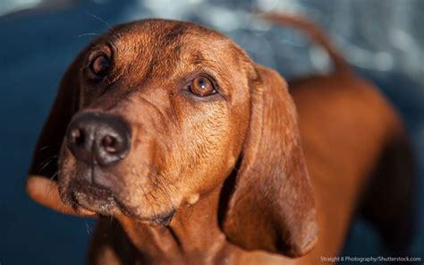 30 least expensive breeds gobankingrates
