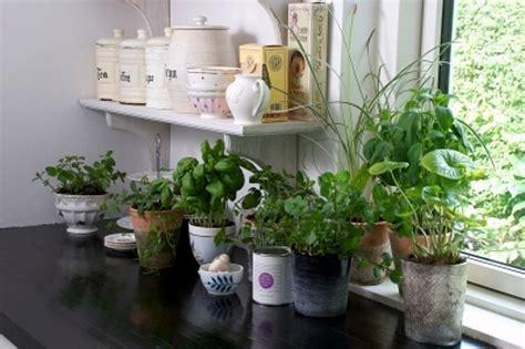 top 10 plante feng shui de interior casa și grădina