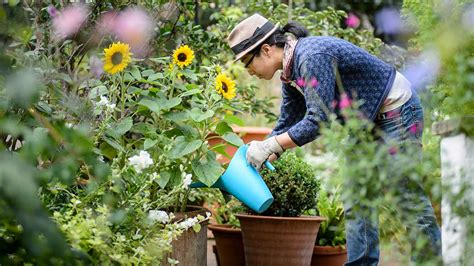 Armchair Gardening  Rhs Courses  Grayshaw & Yeo