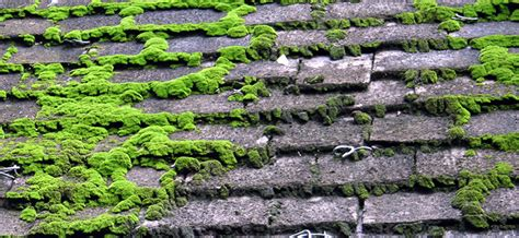 How Do I Stop Moss Growing On Roof Shingles And Roof Tiles? Roofing Contractors St Louis Missouri Fiddler On The Roof Opera Synopsis Metal Materials Maryland Rv Epdm Replacement How To Fix Leak In Car Detection Melbourne Flashing Around Chimney Tax Credit For New 2016