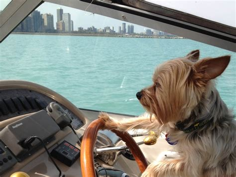 Boat Driving Dog by Pin By Marcali Yacht On Boaters Lifestyle Pinterest