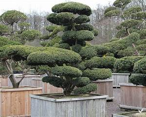 Pflanzen Japanischer Garten Anlegen : pflanzen japanischer garten japanischer garten pflanzen kunstrasen garten japanischer garten ~ Markanthonyermac.com Haus und Dekorationen