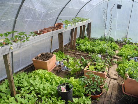 pourquoi semer sous serre ou sous abri jardiner avec jean paul