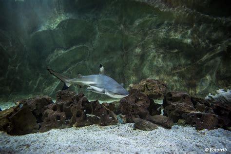 animations 224 l aquarium de vannes dans le morbihan