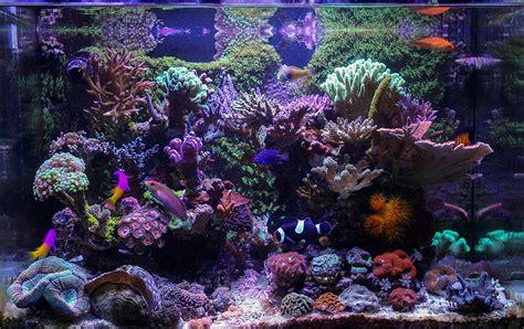 bunster 2016 featured aquariums featured aquariums monthly featured nano reef aquarium