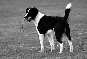 Schwarz Weiß Kontrast : schwarzweiss hund in schwarzweiss foto bild tiere haustiere hunde bilder auf fotocommunity ~ Markanthonyermac.com Haus und Dekorationen