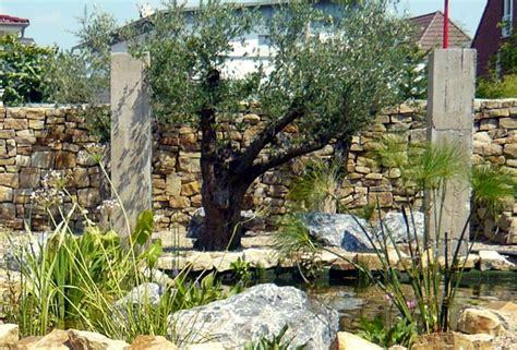 Olivenbäume  Tipps & Beispiele Zur Verwendung Im Garten