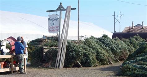 Local Woman Decorates Christmas Trees To Spread Cheer
