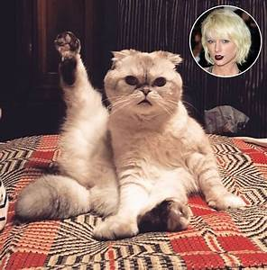 Taylor Swift's Cat Olivia Is Adorably Preparing for Her ...