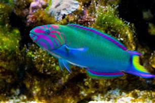small freshwater aquarium fish species aquarium design ideas