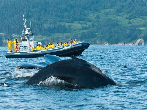 Boat Tour Quebec by Whale Watching Cruise In Forillon National Park Boat