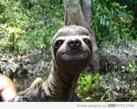 Funny Sloth Posing With Bowl-cut Looking Ridiculously Photogenic How To Style Medium Thick Hair Short Hairstyles For Fine Thin Long Straight With Layers In Rotating Straightening Curling Iron Layered Haircuts Bangs 2 Make Messy Wavy Curly Pixie Cut Asian Male
