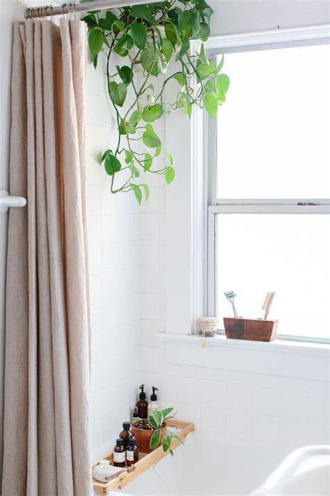 17 best ideas about bathroom plants on indoor plants low light jungle bathroom and