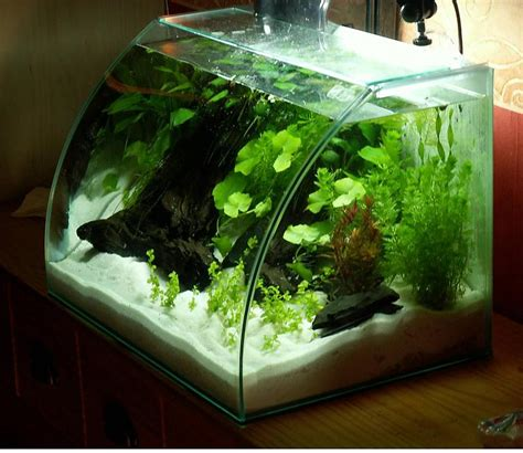 40 liter wei 223 er strand aquarium forum