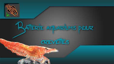 ma batterie d aquariums pour crevettes d eau douce lyn aquariophilie