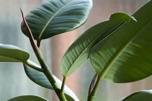 Zimmerpflanze Lange Grüne Blätter : moderne zimmerpflanzen als frische deko f rs zuhause frisch mobel ~ Markanthonyermac.com Haus und Dekorationen