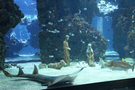 admirez les poissons du mus 233 e oc 233 anographique de monaco et f 233 minine