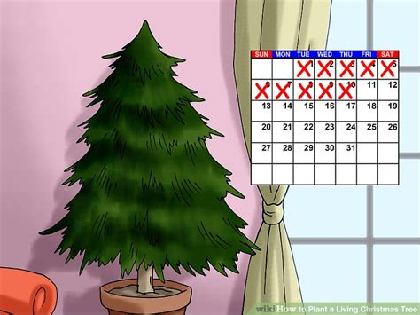 How To Plant A Living Christmas Tree (with Pictures)-wikihow