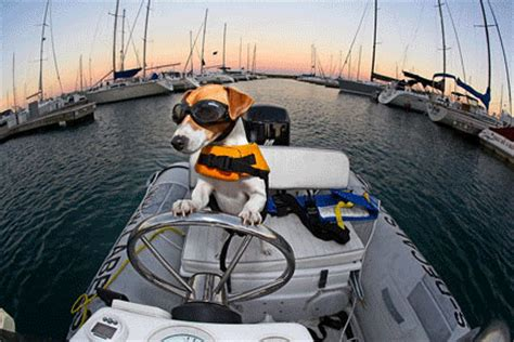 Boat Driving Dog by Driving Gif Find Share On Giphy