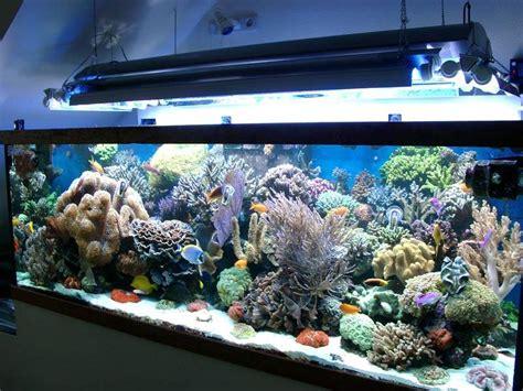 d 233 coration aquarium recifal occasion metz 12 aquarium de aquarium nancy tarif