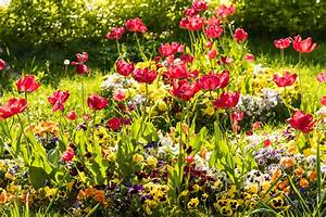 Garten Blumen Pflanzen : blumen im garten pflanzen sch ne ideen f r fr hling sommer ~ Markanthonyermac.com Haus und Dekorationen