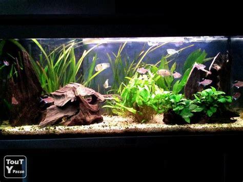 aquarium aquatlantis 180litres tout 233 quip 233 poissons essonne